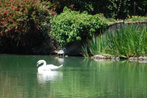 White Swan Chant: Chants for Meditation