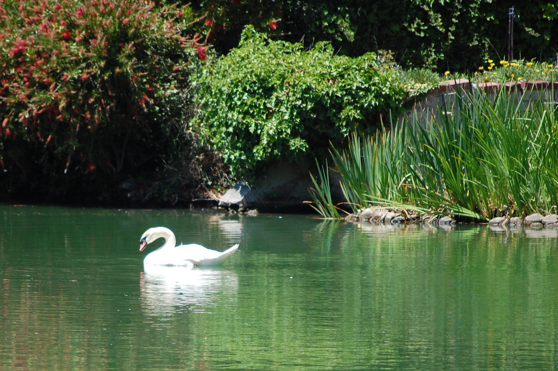 White Swan Chant: Chants for Meditation